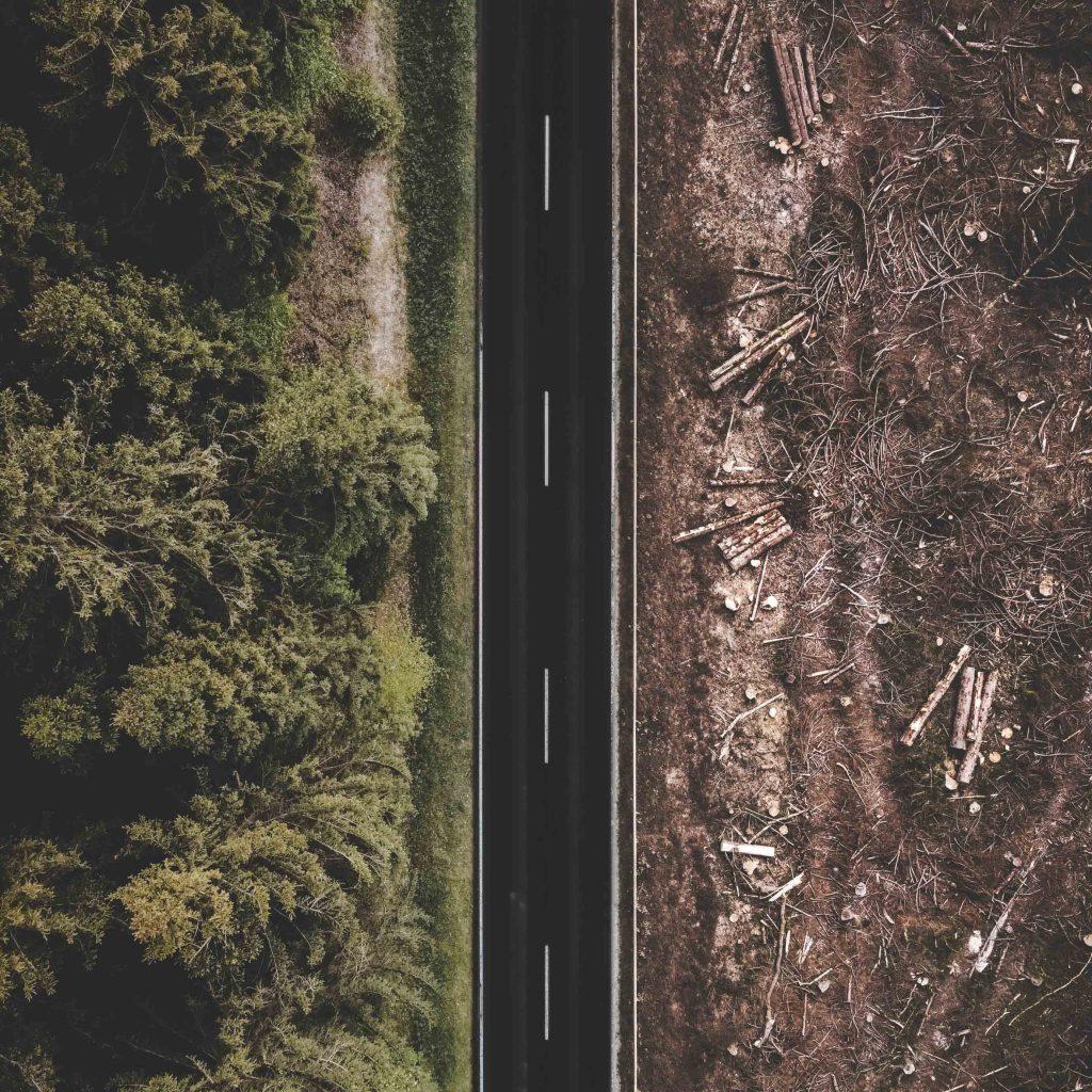 ogni anno vengono abbattuti 15 miliardi di alberi